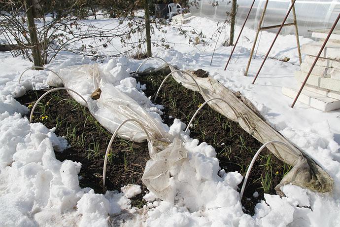 To løgbede med bar jord midt i snekaos.