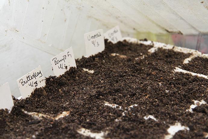 Frøene er dækket med jord, som jeg efterfølgende vil trykke let sammen, for at frøene skal få god jordkontakt. Til slut sprayes med vand.