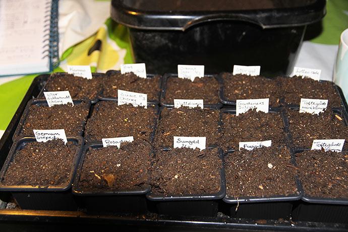 Jeg såede tomater til drivhuset - 14 sorter.