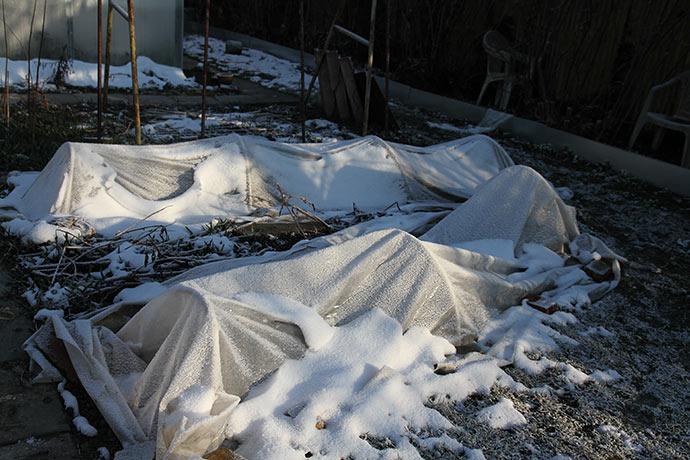 30. marts: Der er stadig frost og sne sidst i marts og løgene er igen under overdæknng-
