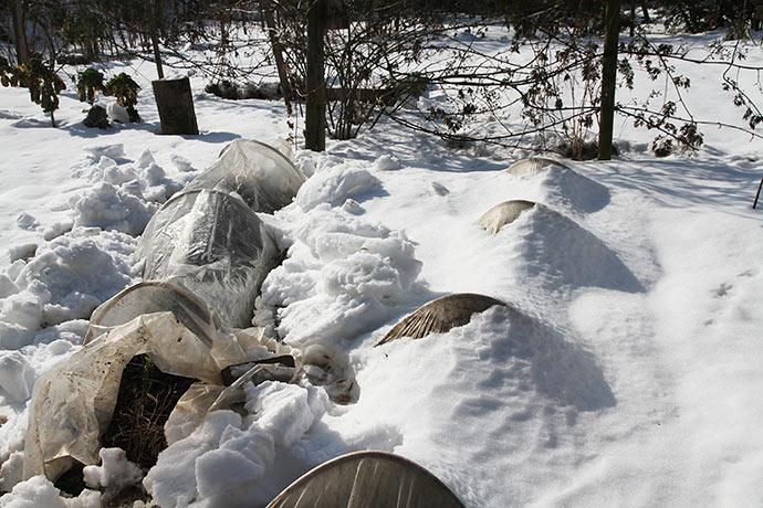 Løgtunnelerne blev gravet fri af sneen.