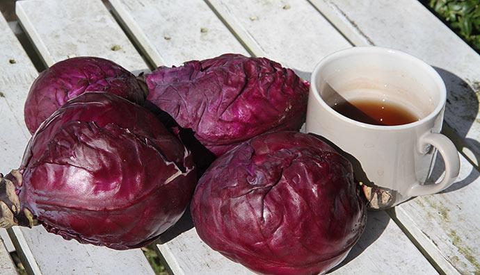 I dag var det forår. Et sikkert tegn er når tekoppen kommer med i haven. Om vinteren går jeg ind og får en kop varm te.