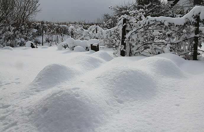 28. februar: Sneen har dækket de to overdækninger over løgene.
