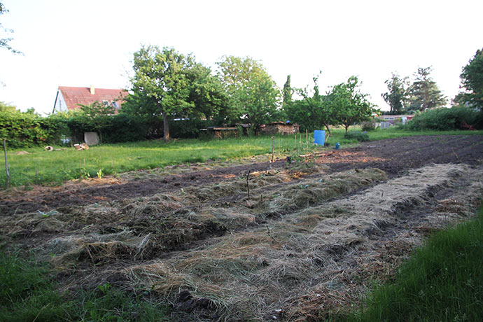 Grønsagsmarken set fra det nordlige hjørne og med vores hus i baggrunden.