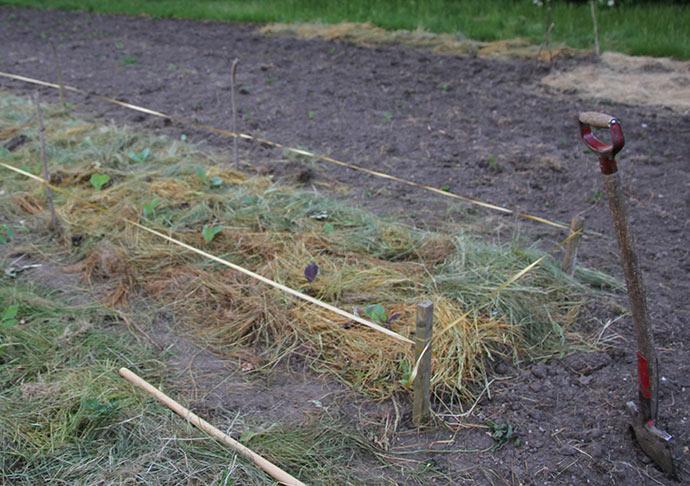 Kålbedet blev hegnet ind med et lavt hegn i ca. 18 cm højde, så fasanen ikke går ind og æder kålplanterne.