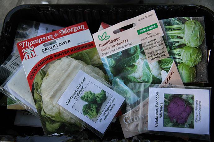 Jeg trives bedst i skyggen - og her kan man jo så. Broccoli, blomkål, knudekål og salat blev det til.