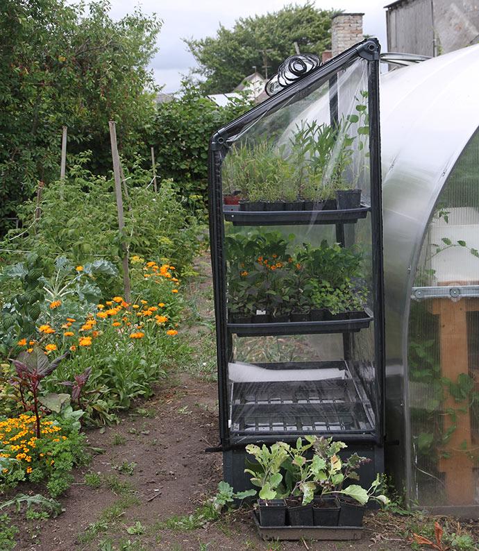 Salaten er spiret og er flyttet ind i mit nye Growcamp formeringshus med 9 bakker til planteformering.