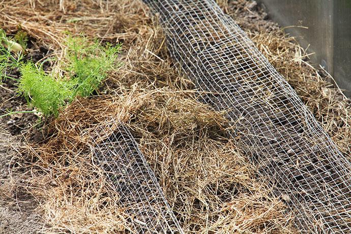 Et hurtigt forsøg med små bure af volierenet til salatplanter.
