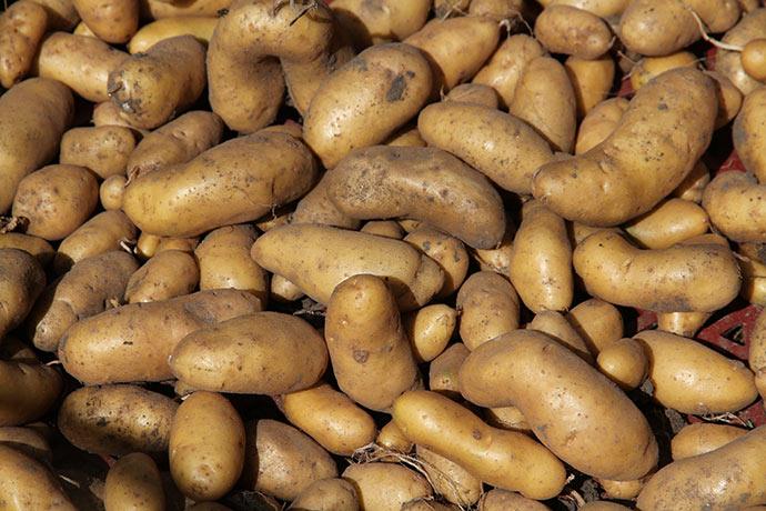 Så flotte - her er inge problemer med at bruge egne læggekartofler.