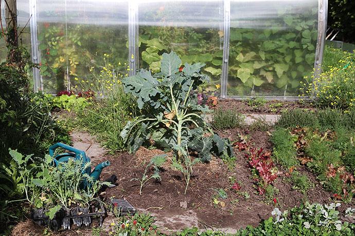 Nu plantes og sås der, hvor der er ledig plads. Her plantes lidt Fizz kål til venstre for et bed med blandet salat og dild.