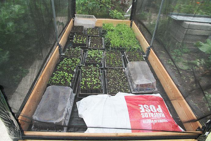 Der er fyldt godt op med forkultiverde planter. Løg, asiatiske bladgrønsager, salat og spinat.