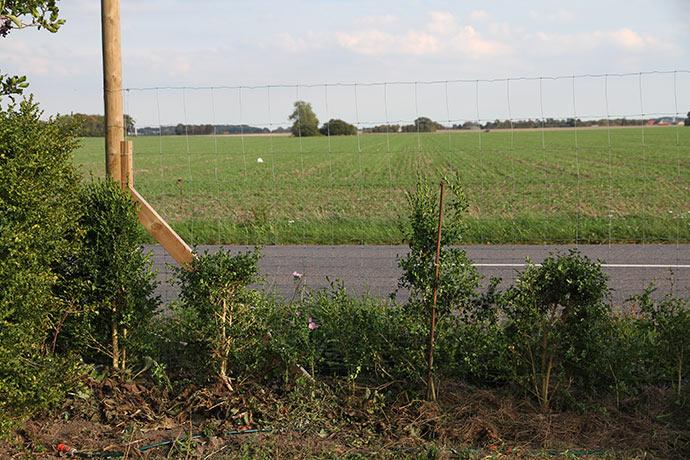 Her er der helt åbent, men på en stor del af hækstykket står der jordkokker, der giver læ til hækken.