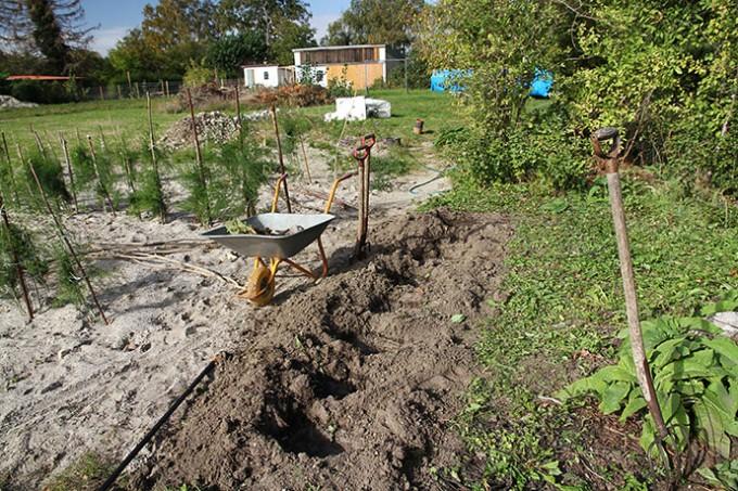 Hullerne er gravet i knastør jord.