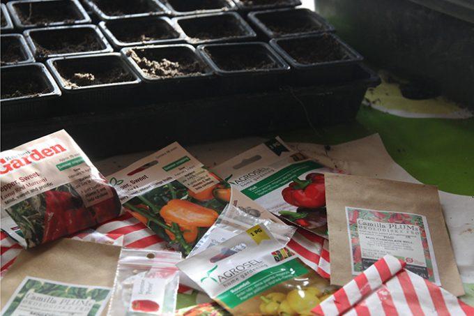 Det er dejligt igen at starte det nye vækstår op med fingrene i jord og frøposer på bordet.