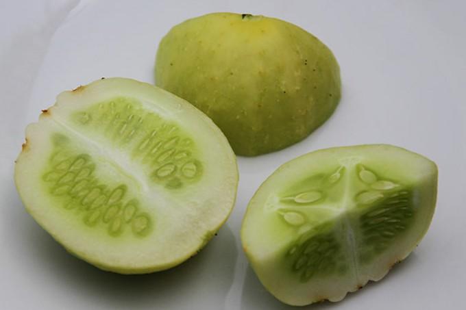 Agurksorten Lemon Apple - på dansk citronæbleagurk.